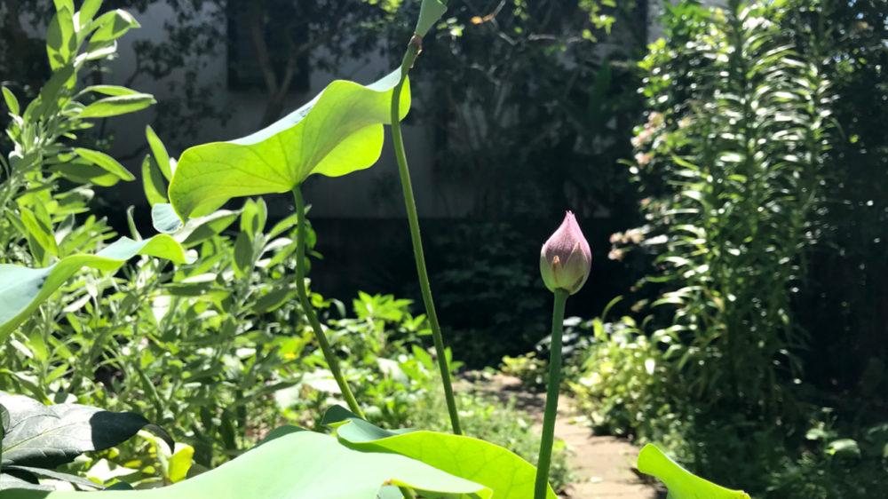 庭パトロール 7月